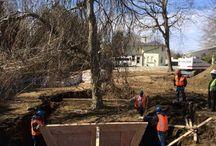 TransPlant of Trees / Transplantes de arbolado