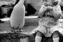 penguin love / by Ashleigh Williams