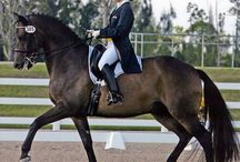 English Riding♥ / by Hailey Earnhardt