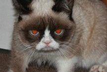 Grumpy Cat / by Misty Boggs