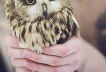 Pets photography - inspiration