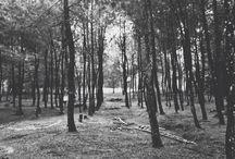 Black & white / Forest