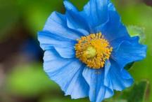 flowers/gardens / by Averi S