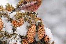 winter / by Tammy Hija