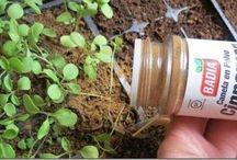 Zimt gegen Ameisen u. Mücken streuen