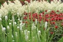 Plant combinations / A collection of plant combinations to remember.