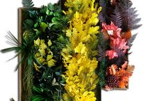 Stabilized Plant Panels / Stabilized decorative plant panels - handmade - for offices, restaurants, shops and your home | LinfaDecor Design