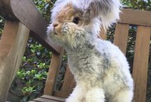 Fur BBE / First child x Dunedin edition