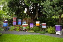 Bees / by Erika Noel