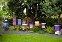 Beekeeping & Bee Hives