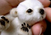 Precious baby animals❤ / All kinds if animal babies / by Diana Hensley