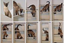 Katteideer