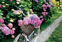 gardening / by Donitta Robinson