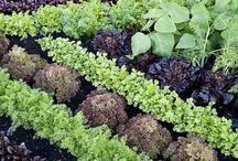 Green Fingers / Gardening tips, garden products, garden blogs
