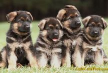 Puppies / by Mary Waldschmidt