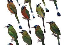 Uccelli- Identificazione