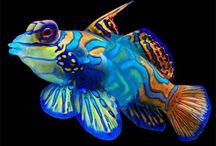 美しき魚類