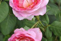 lubomira / kwiaty