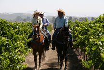 Adventures with Wine / Travel spots for wine lovers.