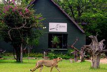 Bush lodges / Free and wild