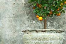 plantando  mexericos em vaso.