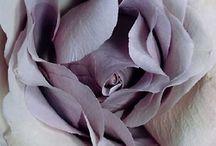 COLOUR: Lilac