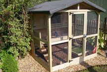 rabbit hutches and bird aviary