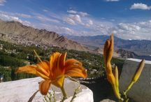 Top view from Leh Palace, Leh-Ladakh #voyage4all