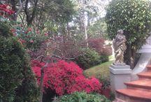 Falls Gallery Gardens / Gardens
