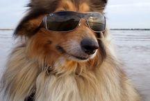 Dogs Wearing Sunglasses / Dogs Wearing Sunglasses