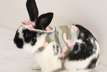 Rabbits in outfits