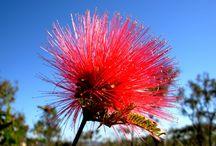 umm interessante / flores brasileiras