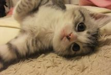 Cat + Kitty