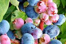 Jardinería: Frutas