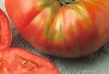 PRA-zelenina / Netradiční zelenina