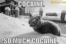 meow / cats