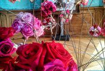 garden roses David Austin Collection