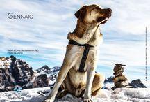 Calendario 2015 / I protagonisti del primo calendario Trip For Dog sono i meravigliosi cani che fanno parte della nostra community ripresi durante le vacanze con i propri umani.  Parte del ricavato dalla vendita di questo calendario verrà devoluto in beneficenza e trasformato in cibo per i cani più sfortunati in attesa che una famiglia li accolga. Prenotabile da qui: https://www.facebook.com/tripfordog/app_251458316228