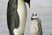 Penguins ❤️ / by Michelle Mobley