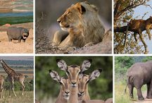 Africa's Best Game Reserves / Africa is the only continent that is blessed with spectacular and varied wildlife reserves. The continent, filled with thriving wildlife and unflinching local, rustic culture and traditions offers you more than you can ever imagine.