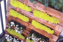 Gardening/Landscaping / by Lisa Diaz