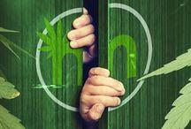 Online Marijuana Design Blog / A blog presented by the webdev team at Online Marijuana Design.