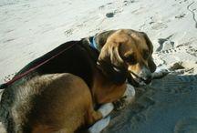 Honden inclusief onze hond.  Jessie