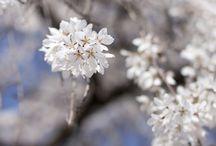 natura: fiori,paesaggi...