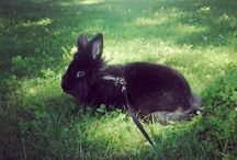 My Bunnies / #Bunnies #Pets