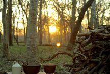 Picnic + Camping