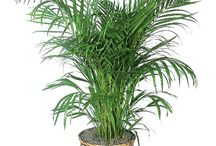 Home Decor - Hard to kill indoor plants