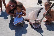 Sharks in Greece