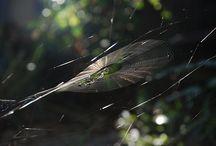 weaving a web... / by Jennifer DeFillippo