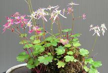 Art floral japonais